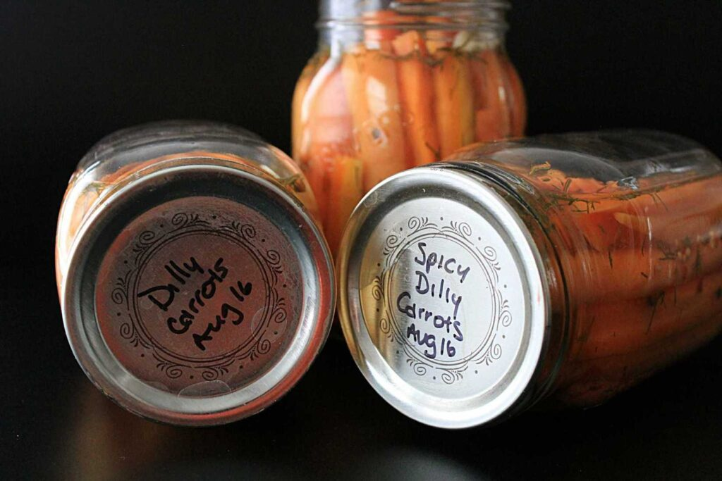 three jars of pickled carrots with dill floating in the jars.